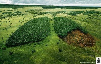 ecologia-papel